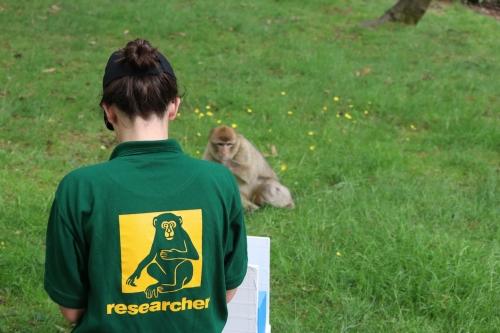 Alyssa Arre showing a monkey her cognitive experiment. (Photo credit: Dr. Francesca De Petrillo)
